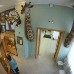 Африканские звери поселились в центре Екатеринбурга