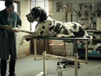 Драма «Догмэн» выдвинута на премию «Оскар»