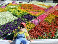 В парке «Музеон» открывается Международный фестиваль садов и цветов