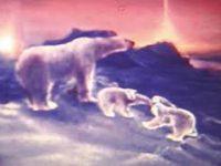 Сотрудники национального парка «Русская Арктика» восстановили кинопленку 70-х годов