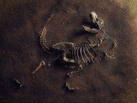 Найдены доказательства сосуществования в древности людей и гигантов
