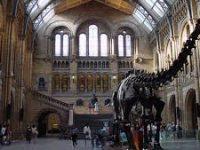 Лондонский музей естествознания возобновил прием посетителей