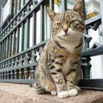 В России появился Союз музейных котов