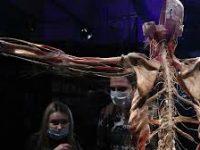 Организаторы выставки «Мир тела» отреагировали на сообщение о проверке СК