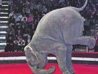 В Петербурге открылась выставка слонов и китов Стефано Бомбардьер